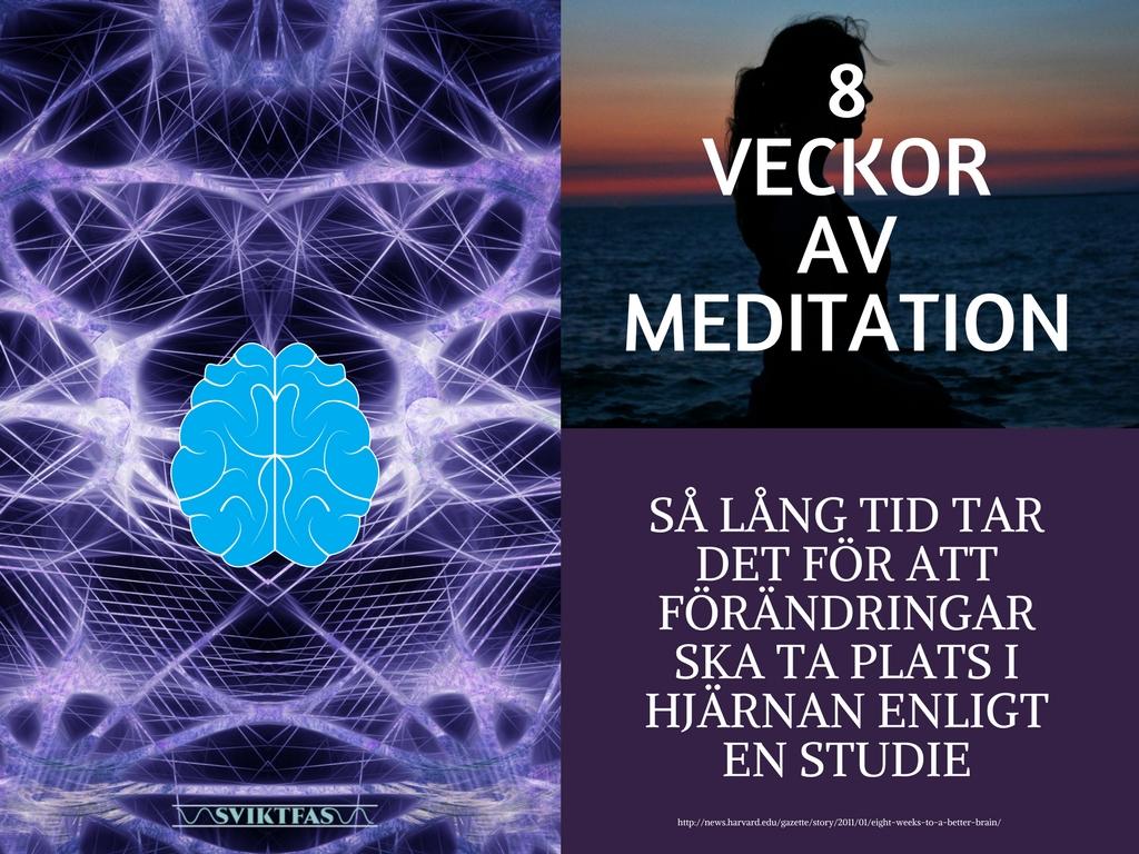 8 veckor av meditation förändrar hjärnan
